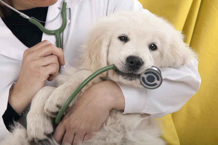 ¿En qué consiste un seguro para animales?